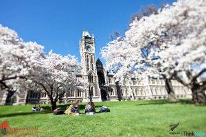 Thành Phố Dunedin New Zealand Môi Trường Lý Tưởng Để Thực Hiện Ước Mơ Du 3